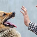 dog showing teeth at man